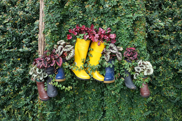 Shoes as planters