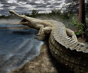 The Fight For Being The Largest Crocodile