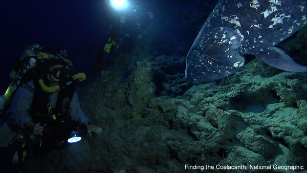 The Lost Coelacanth
