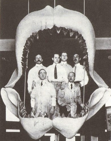 Carcharodon Megalodon, The One Who Devoured Whales