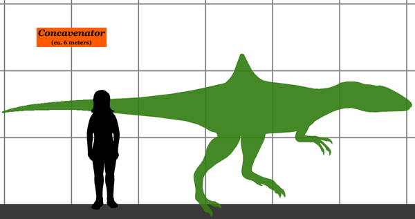 Size of the Concavenator relative to a human