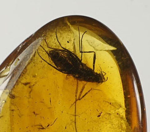 01035 - Rare Unidentified 0.58 Inch Baltic Amber With An Inclusion Of Fossil Insect ¿Coleoptera?