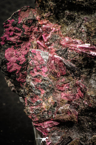 07626 -  Nice Pink Erythrite Crystals on Matrix - Bou Azzer Mine (South Morocco)