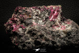 07628 -  Nice Pink Erythrite Crystals with Quartz - Bou Azzer Mine (South Morocco)