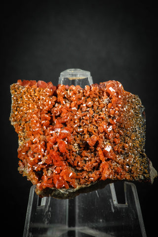 88129 -  Beautiful Red Vanadinite Crystals on Natural Manganese-Iron Oxide Matrix from Morocco
