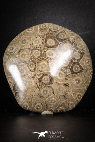 88390 - Devonian Polished Fossil Coral Hexagonaria Rugose