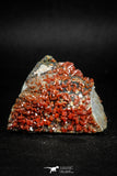 05087 - Beautiful Red Vanadinite Crystals Cluster from Mibladen Mining District, Midelt Province, Morocco