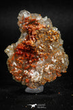 05091 - Beautiful Red Vanadinite Crystals Cluster from Mibladen Mining District, Midelt Province, Morocco