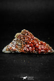 05092 - Beautiful Red Vanadinite Crystals Cluster from Mibladen Mining District, Midelt Province, Morocco