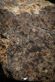 05106 - Nice Polished Section NWA Unclassified L-H Type Ordinary Chondrite Meteorite 24.0g