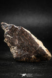 05111 - Beautiful Polished Section NWA Unclassified L-H Type Ordinary Chondrite Meteorite 27.0g