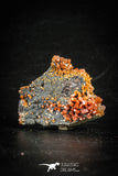 88511 -  Beautiful Red Vanadinite Crystals on Natural Manganese-Iron Oxide Matrix from Morocco