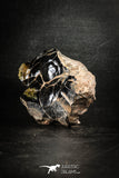 88522 - Dark Gray Bubbly Botryoidal 3.53 Inch Goethite from South Morocco