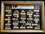 99040 - Fossil Shark Teeth Collection Display Box (Large) 40 - 65 Million Years