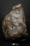 06581 - Fully Complete NWA L-H Type Unclassified Ordinary Chondrite Meteorite 69.0g