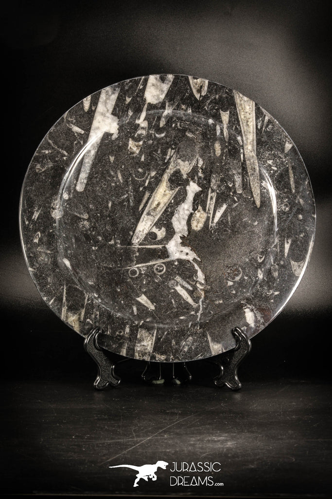 88884 - Top Beautiful Decorative Polished Circle Shaped Plate with Devonian Fossils