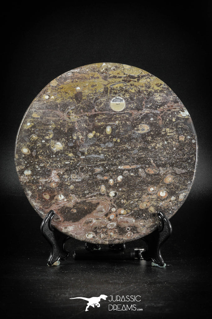 88895 - Top Beautiful Decorative Polished Cirlce Shaped Plate with Devonian Fossils