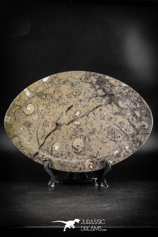 88897 - Top Beautiful Decorative Polished Oval Shaped Plate with Devonian Fossils