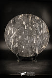88898 - Top Beautiful Decorative Polished Circle Shaped Plate with Devonian Fossils