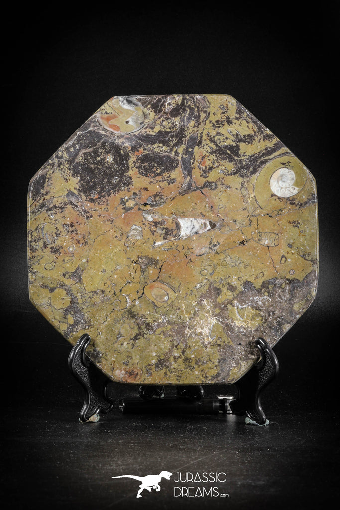 88904 - Top Beautiful Decorative Polished Octagon Shaped Plate with Devonian Fossils