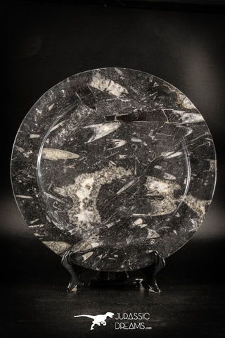 88907 - Top Beautiful Decorative Polished Circle Shaped Plate with Devonian Fossils