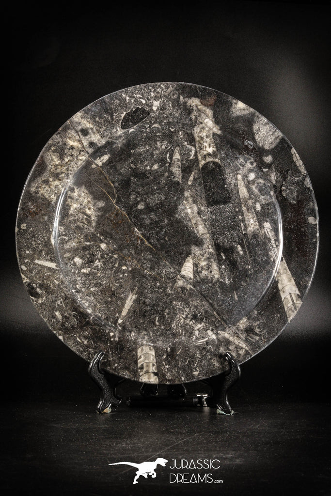 88908 - Top Beautiful Decorative Polished Circle Shaped Plate with Devonian Fossils