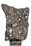 08850 - Top Rare Polished Thin Section NWA Carbonaceous Chondrite CV3 Type  5.117g
