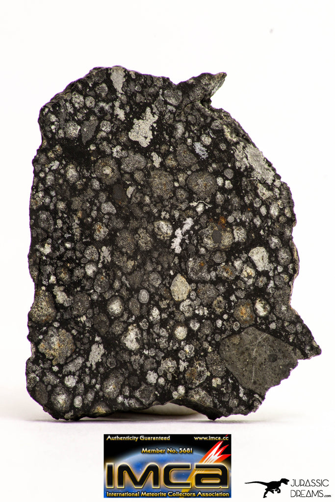 08856 - Top Rare Polished Thin Section NWA Carbonaceous Chondrite CV3 Type - 2.891 g