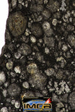08857 - Top Rare Polished Thin Section NWA Carbonaceous Chondrite CV3 Type - 3.324 g