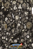 08865 - Top Rare Polished Thin Section NWA Carbonaceous Chondrite CV3 Type - 2.584 g