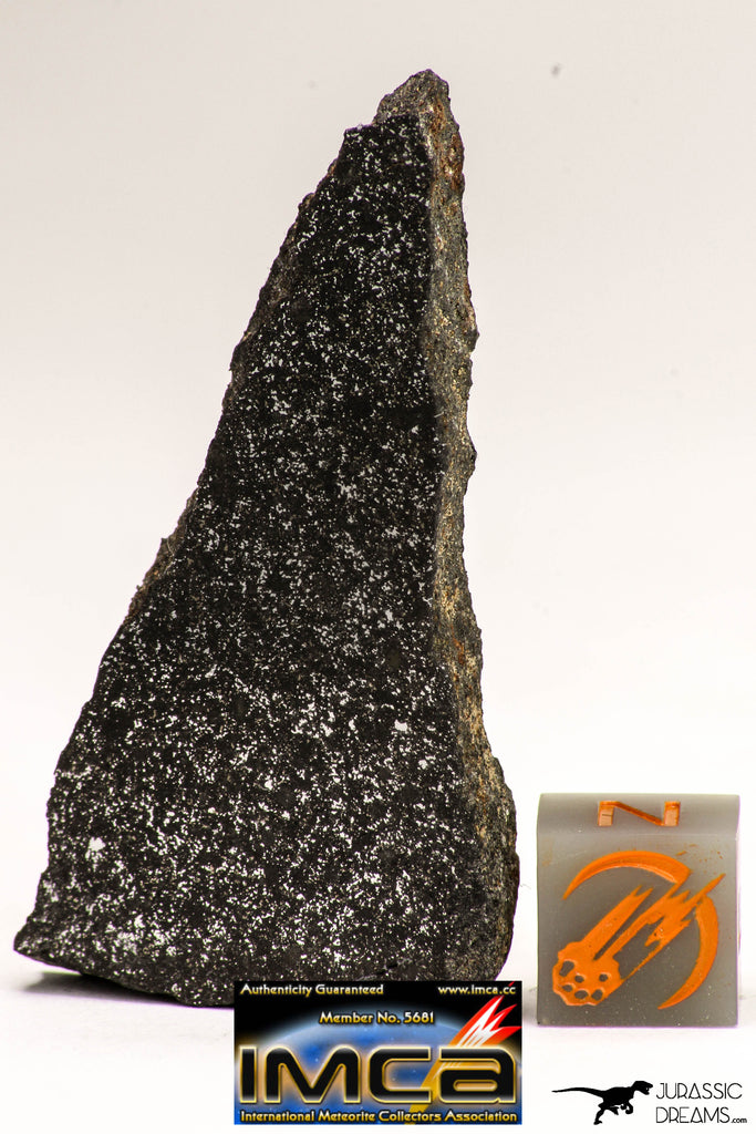 08941 - Top Rare NWA Polished Section of Enstatite Chondrite EL6 13.7 g