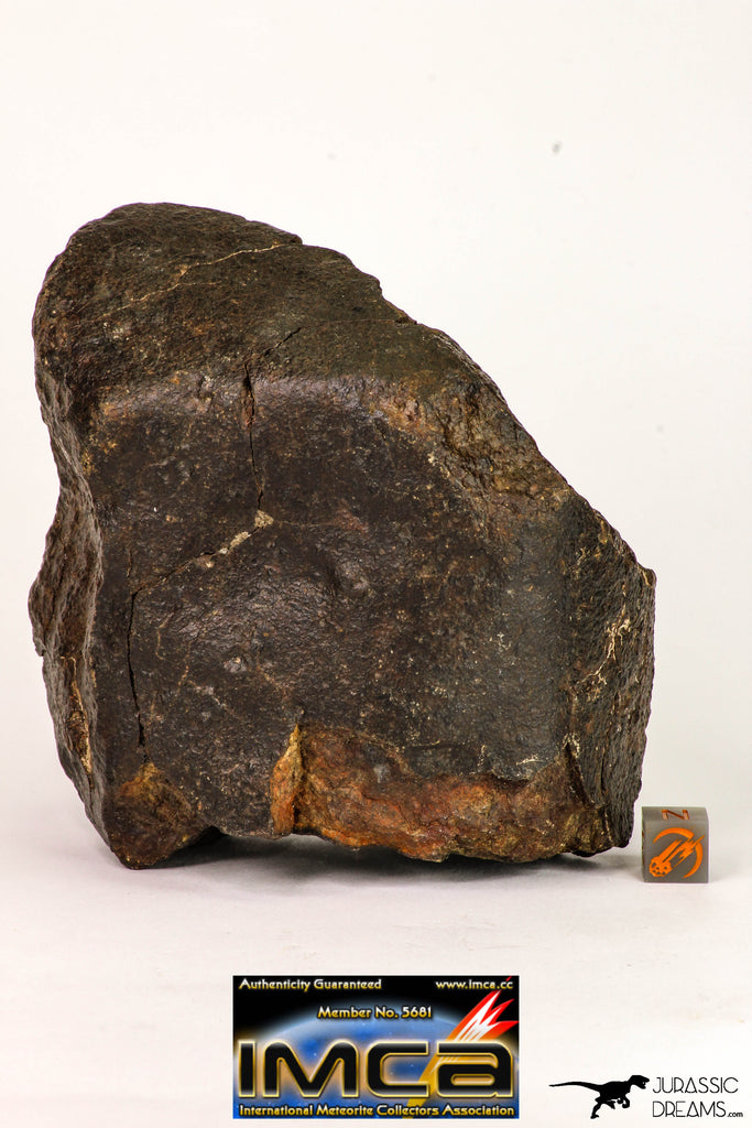 08995 - Almost Complete NWA Unclassified Ordinary Chondrite Meteorite 1184 g