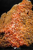 06261 -  Beautiful Red Vanadinite Crystals Cluster from Mibladen Mining District, Midelt Province, Morocco