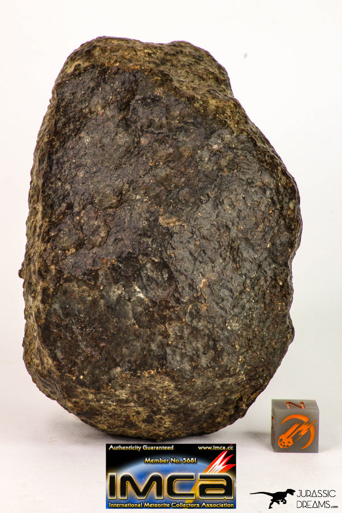 08999 - Almost Complete NWA Unclassified Ordinary Chondrite Meteorite 584.7 g