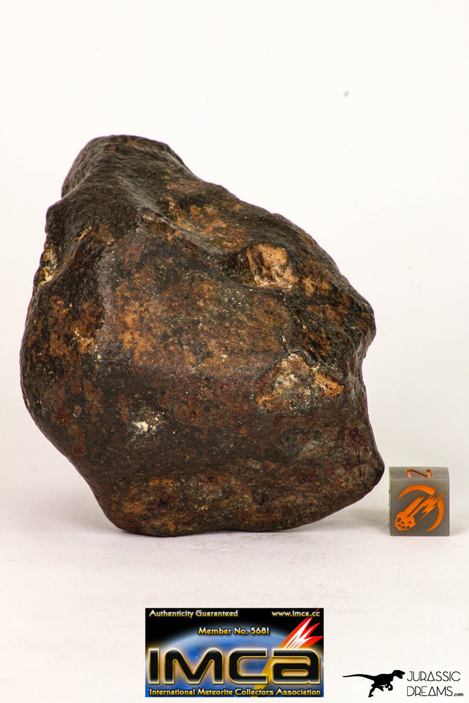 09001 - Almost Complete NWA Unclassified Ordinary Chondrite Meteorite 317.4 g