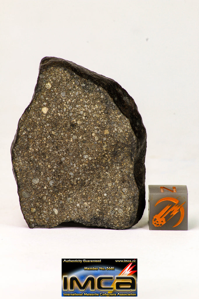 09018 -Top Beautiful NWA Polished Section of Chondrite Meteorite Type L3 with Fusion Crust  26.3 g