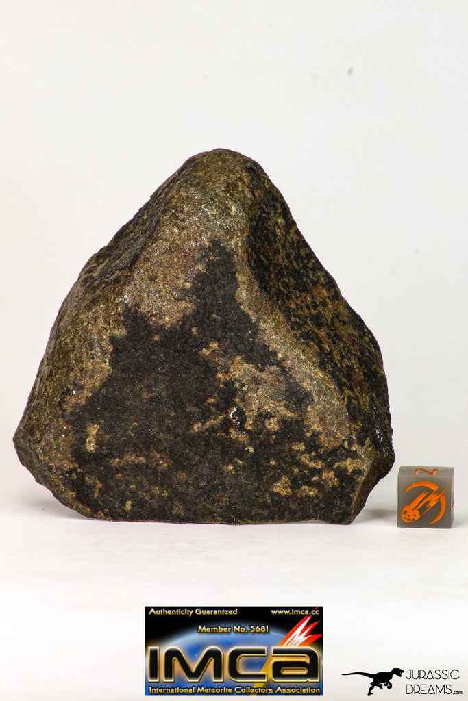 09022 - Complete NWA Unclassified Ordinary Chondrite H6 Meteorite 251.6 g With Fusion Crust ORIENTED