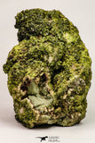 09113 - Slender Grass Green Epidote Crystals on Matrix Imilchil Mine Morocco