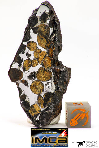 09152 - Sericho Pallasite Meteorite Polished Section Fell in Kenya 24 g