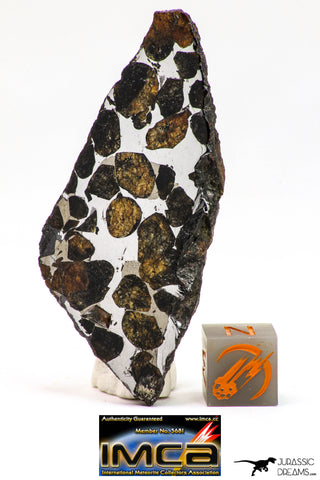 09153 - Sericho Pallasite Meteorite Polished Section Fell in Kenya 18.6 g