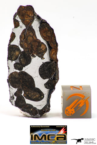 09154 - Sericho Pallasite Meteorite Polished Section Fell in Kenya 10.1 g