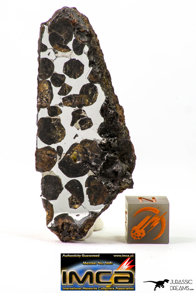 09178 - Sericho Pallasite Meteorite Polished Section Fell in Kenya 24.4 g
