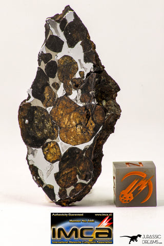 09179 - Sericho Pallasite Meteorite Polished Section Fell in Kenya 17.6 g
