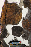 09180 - Sericho Pallasite Meteorite Polished Section Fell in Kenya 14.3 g