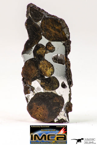 09181 - Sericho Pallasite Meteorite Polished Endcut Section Fell in Kenya 5.8 g