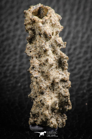 "07304 -  Top Rare 1.81 Inch Fulgurite (""Petrified lightning"") Collected in Algeria"