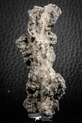 "07306 -  Top Rare 2.67 Inch Fulgurite (""Petrified lightning"") Collected in Algeria"