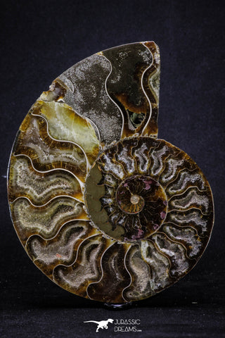 20303 - Cut & Polished 5.37 Inch Cleoniceras sp Lower Cretaceous Ammonite Madagascar - Agatized
