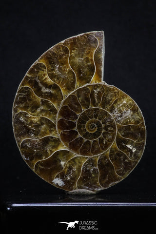 20314 - Cut & Polished 2.38 Inch Cleoniceras sp Lower Cretaceous Ammonite Madagascar - Agatized