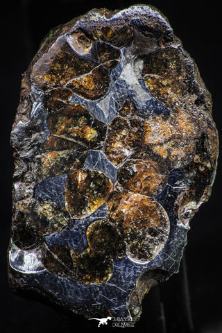 21381 -  Sericho Pallasite Meteorite Polished Section 24g Fell in Kenya
